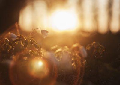 Viveza: Das Spiel mit dem Licht