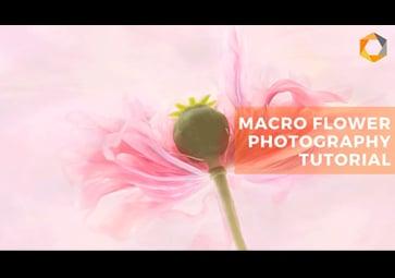 Blumenporträts: Tipps zur Makrofotografie und Verwendung der Nik Collection 3 By DxO (in Englisch)