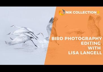 Vogelfotografie: Die Regeln brechen mit der Nik Collection 3 By DxO (in Englisch)