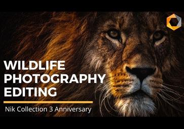 Neu! Wildlife-Voreinstellungen für Ihre ersten Schritte mit der Nik Collection 3.3 By DxO (in Englisch)