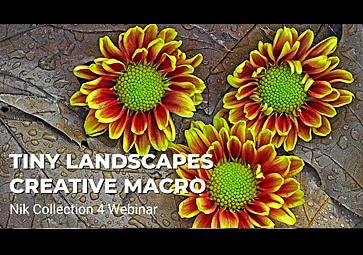 小さな風景:Nik Viveza と Nik Color Efex を使ってクリエイティブなマクロ写真を作成する (英語 )