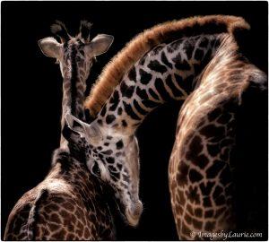 Wildlife, Giraffe, Nik Collection 4
